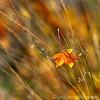 Angwin Garden Fall 2011