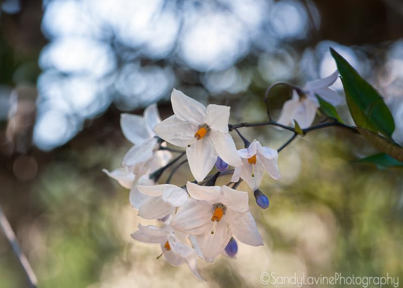 Flower 267