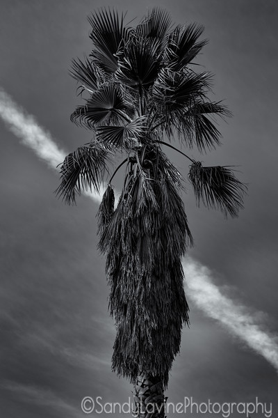 Brrokside Palm Two