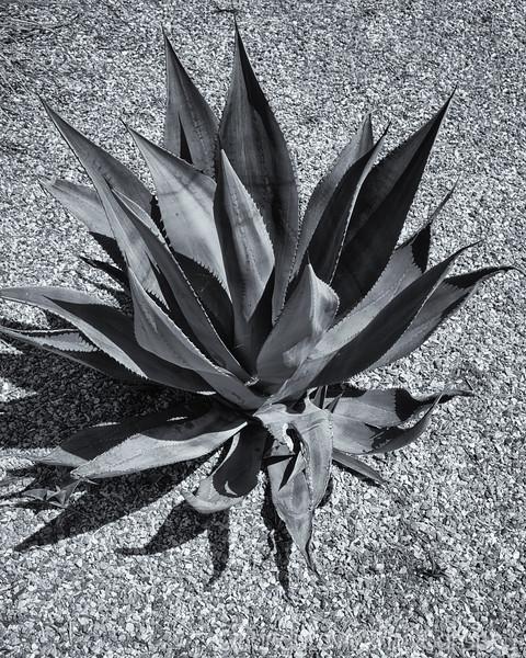 Clos Pegase Cactus 2