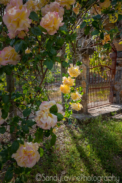 Diogenes Gate and Roses