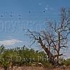 Al-Marah Arabian Horse Ranch, Tucson, Arizona, Judy A Davis Photography