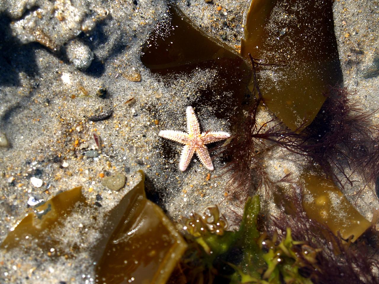 Maine sea life