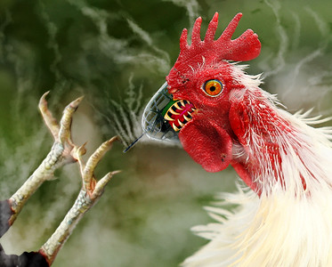 Killer Cock