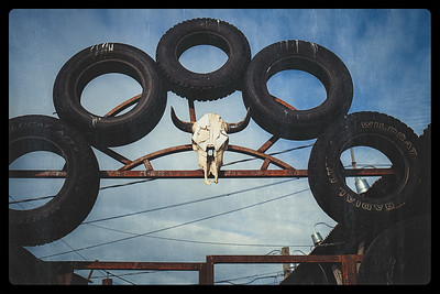 Steer Skull and Tires
