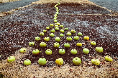 While walking the dog I stopped and spent a few moments arranging these green apples. SW Hinds Street, West Seattle.