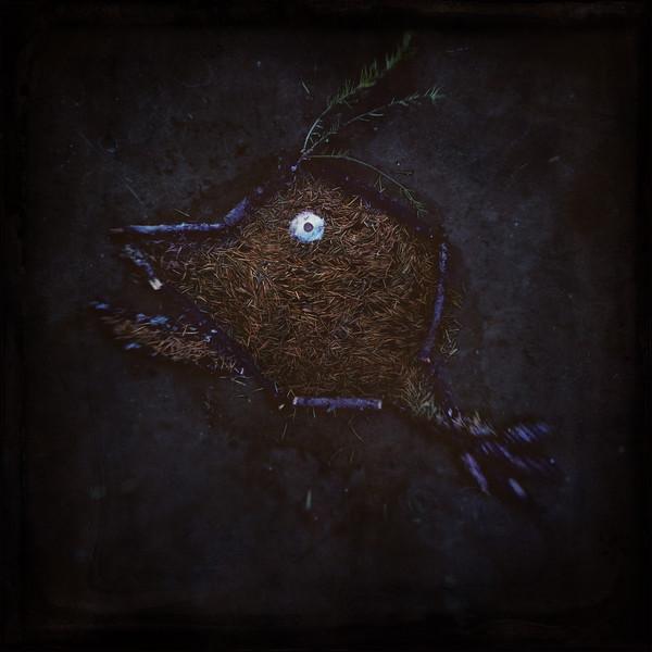 Pine Needle Devil Fish