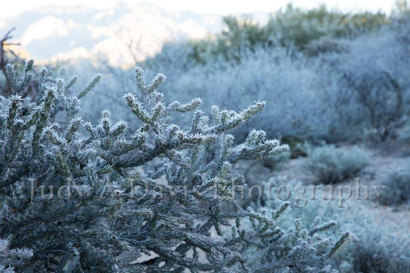 Winter Sonoran Desert