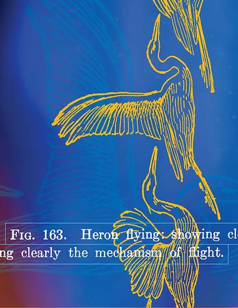 Heron-1sm