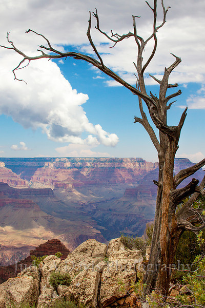 On The Edge<br /> Grand Canyon, Arizona, Judy A Davis Photography, Tucson, Arizona