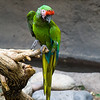 Reid Park Zoo, Tucson, Arizona, Judy A Davis Photography