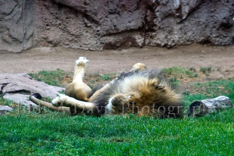 Reid Park Zoo, Tucson, Arizona, Judy A Davis Photography