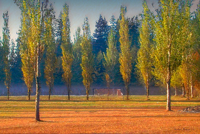Soccer Field, Sunrise
