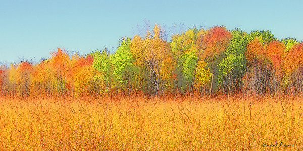 Field and Trees, Autumn