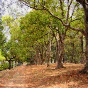 Toowoomba Walk  This town in the Darling Downs of Queensland, Australia, is known for its many parks.