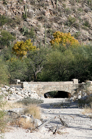Sabino Canyon, Tucson, Arizona, Judy A Davis Photography