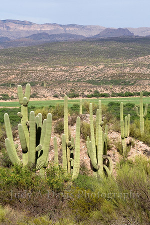 Reddington Pass overlooking the San Pedro River Valley, Tucson, Arizona, Judy A Davis Photography