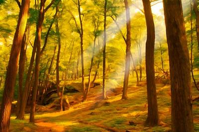 Path in Lothlorien