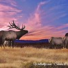 Elk Sunset
