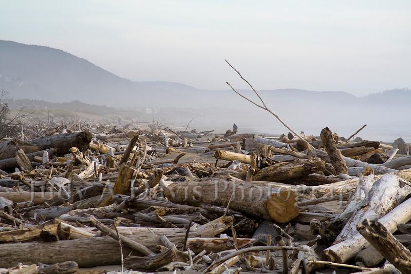 Driftwood on the Oregon coast