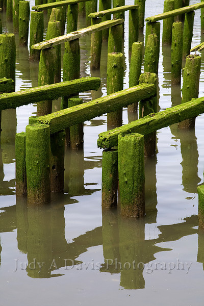 Mossy pilings on the Columbia River, Astoria, Oregon