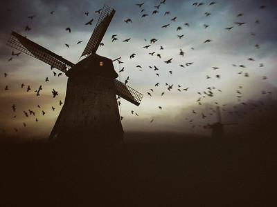 Murder in the Windmill