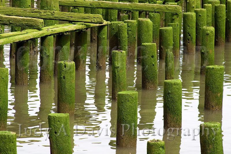 Mossy pilings in Astoria, Oregon