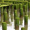 Mossy pilings in Astoria, Oregon