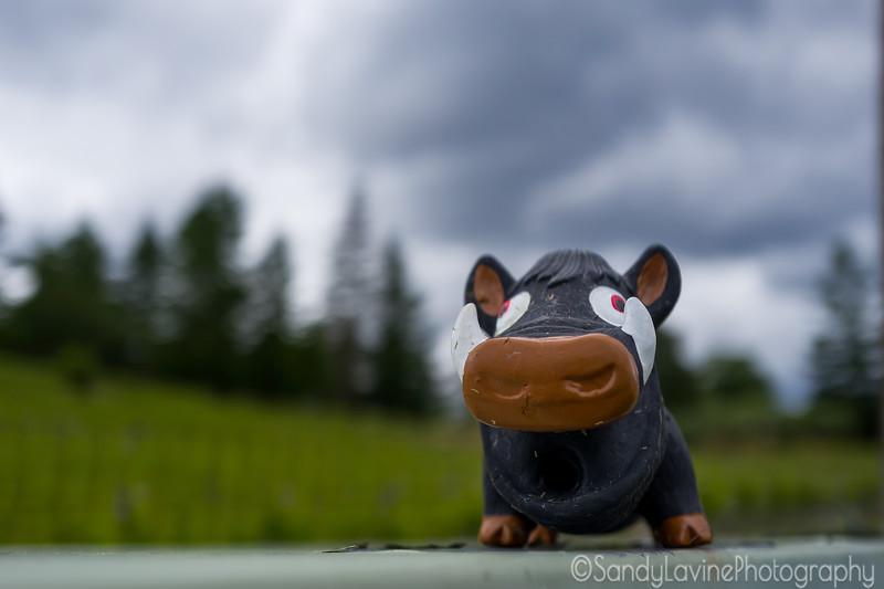 Elusive Vineyard Warthog