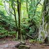 The Rock Trail, Larrabee State Park, Bellingham, WA