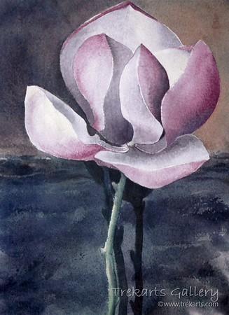 Magnolia By Night - Watercolour 60 x 45cm