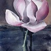 Magnolia By Night - Watercolour 60 x 45cm