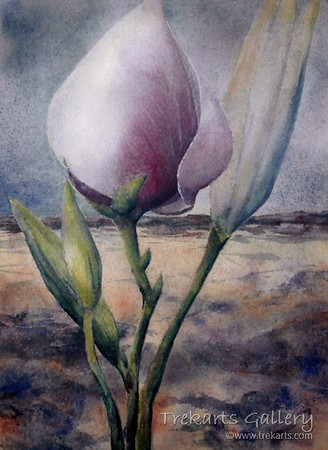 Magnolia By Day - Watercolour 60 x 45cm