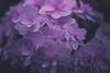 Soft Little Blooms