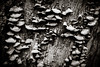 Mushroom Ladder