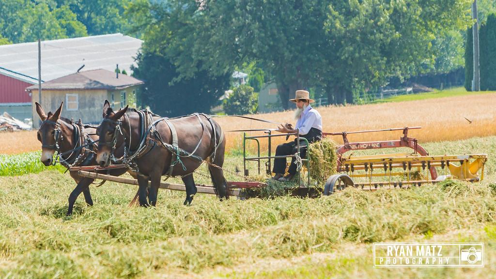 Amish Farmer at work
