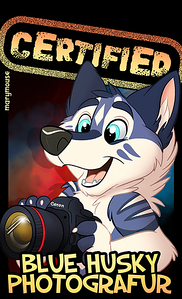 Certified: Blue Husky Photographer