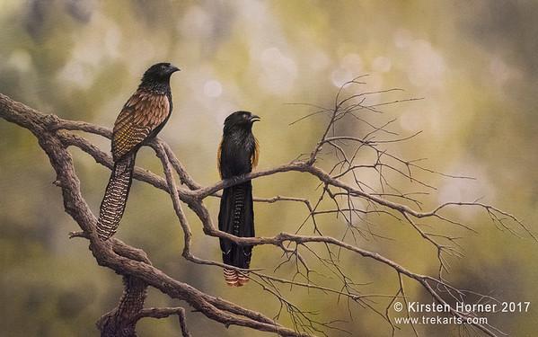 Lake Borumba Pheasant Coucals 2017  |  Acrylic 120 x 75 cm