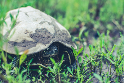 I Am Turtle