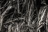 Root Erosion
