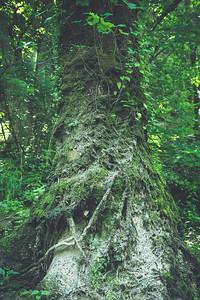 Forest Pillar