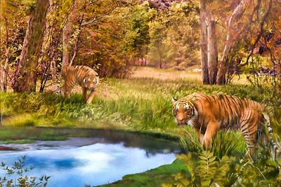 TIGER HAVEN Sumatra Tigers