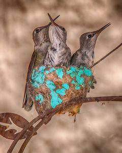 HUMMINGBIRD ARTIST  7-7-2019