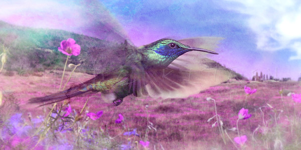 """FLIRTING FLYING HUMMINGBIRD"" (pano/horizontal)"