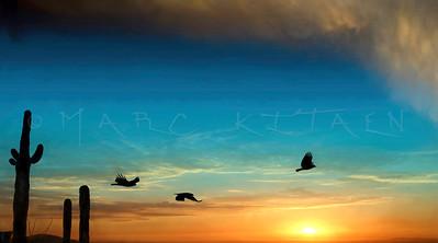 """""""DESERT RAIDERS"""" / Hawks"""