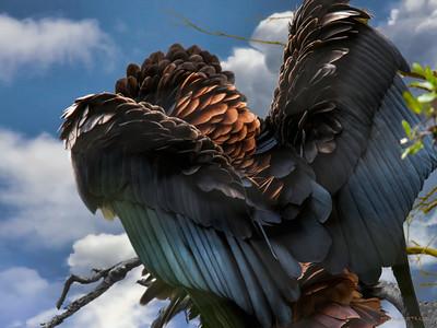 "Bateleur Eagle ""Sky Commander"""