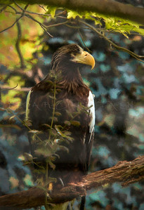 STELLAR EAGLE PORTRAIT