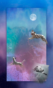 THE DREAMER Dalmatian Dog (pano/vertical)