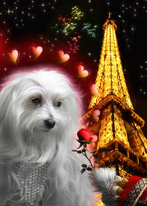 A TIME FOR LOVE LILY THE MALTESE
