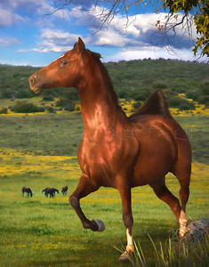 THE PRANCER MORGAN HORSE